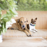 Red Dog and Pippin keep an eye on everything at the corral